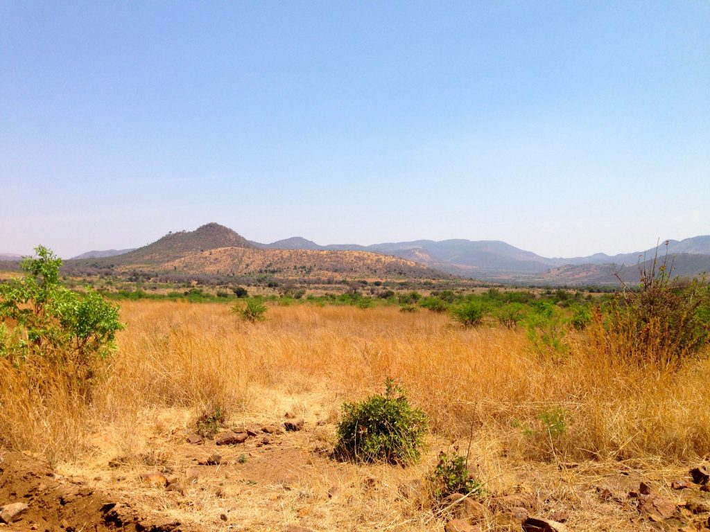 scrubland with mountains in the distance